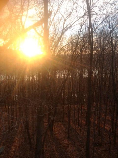 treestand sunrise.JPG