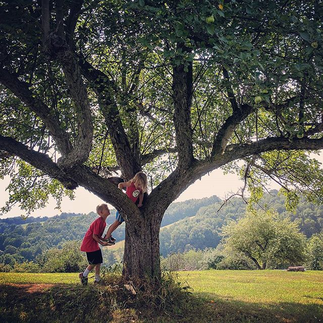 Thank goodness for big brothers while tree climbing.  #outdoorkids #treeclimbing #bigbro #greatoutdoors
