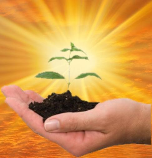 ls-sun-plant_p.png