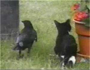 kitten-crow.jpg