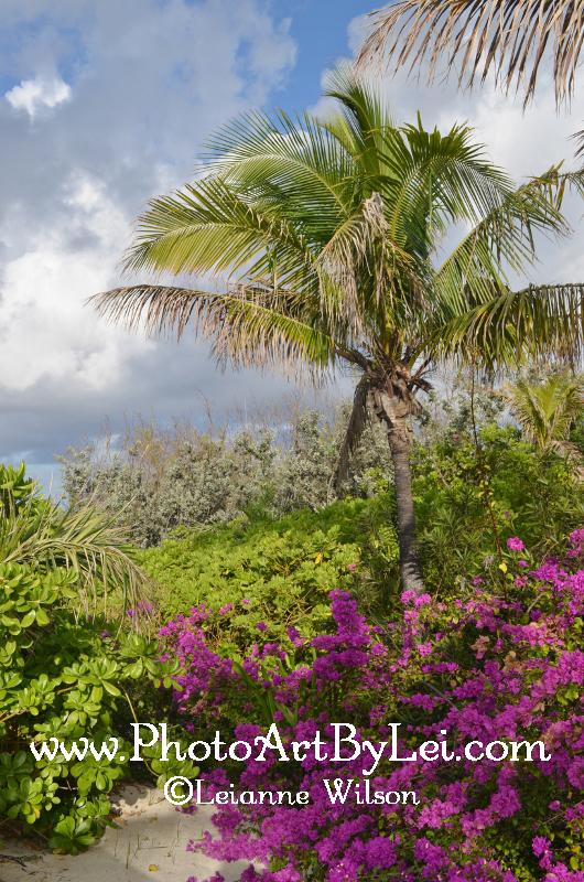 paradise (530x800).jpg