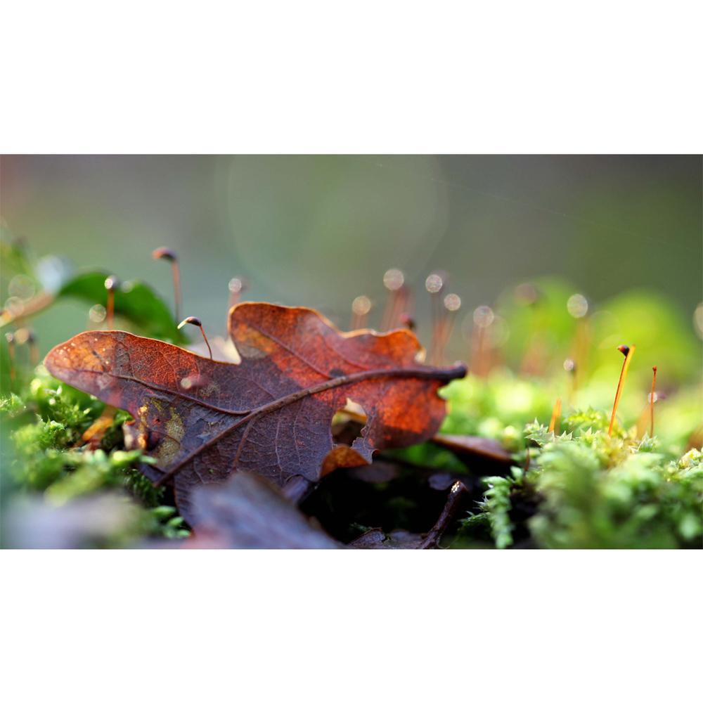 leaf05.jpg
