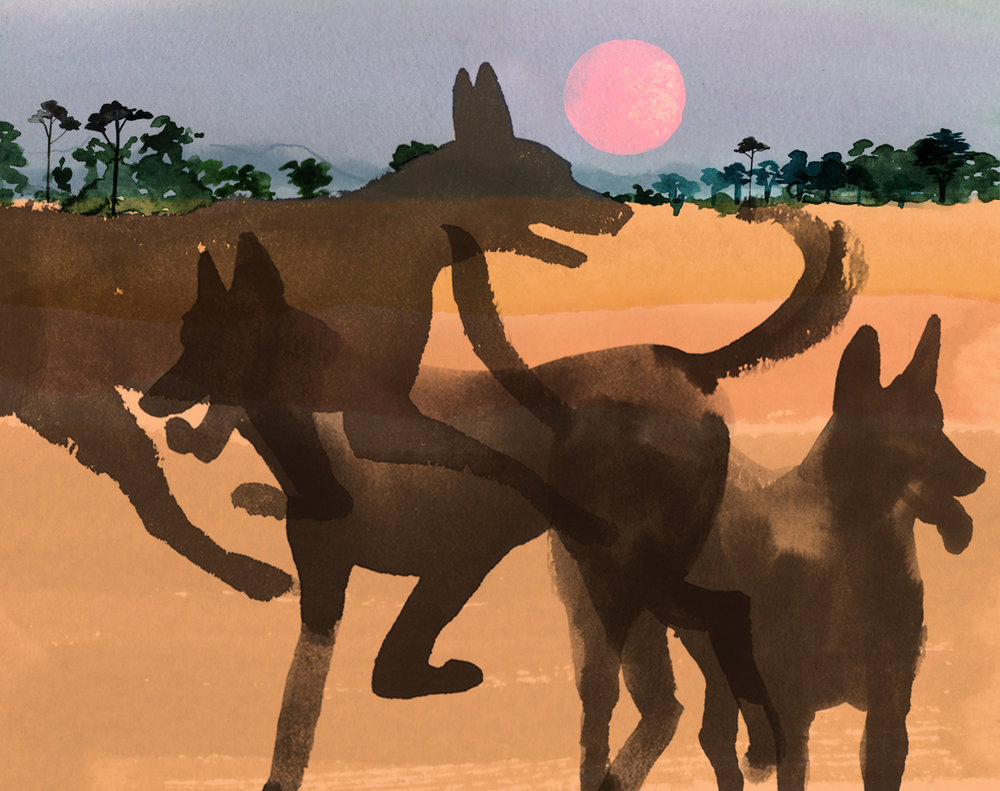 Above: Illustration to accompany a Simon Barnes article about guard dogs in South Luangwa National Park, in the Sunday Times Magazine