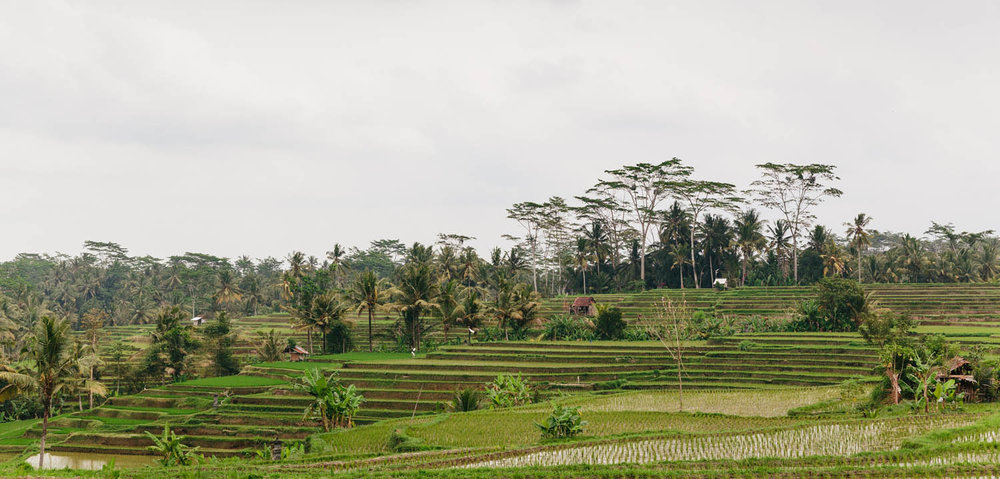 Endless rice terraces