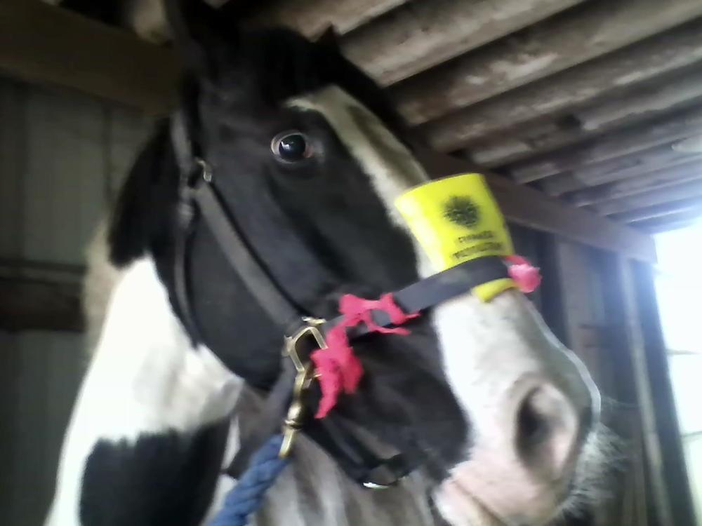 horse blur.jpg