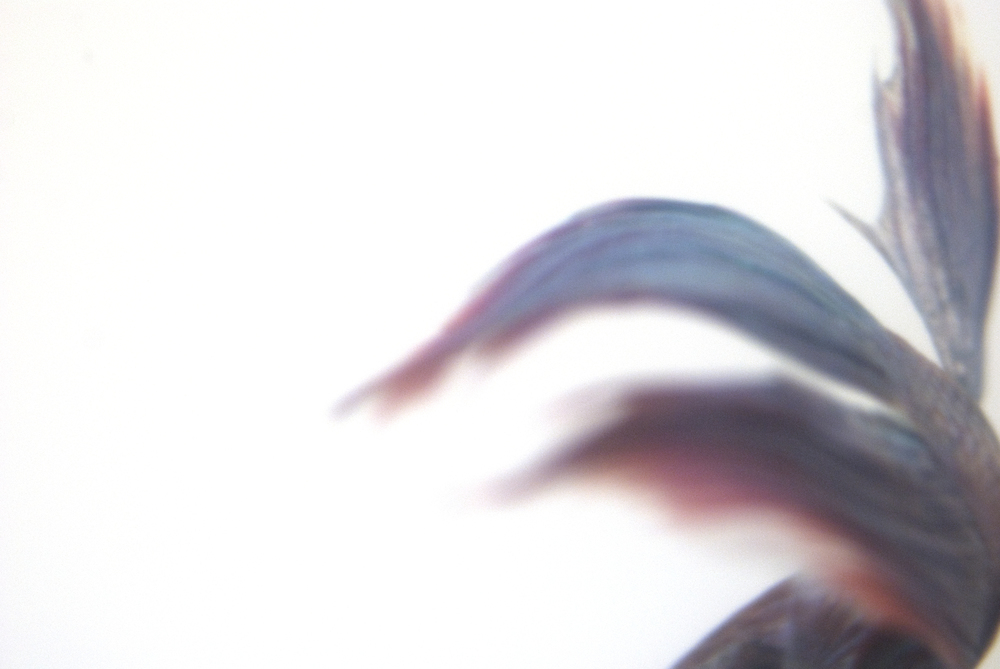 8-fish.jpg