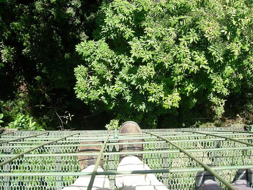 canopy-down.jpg