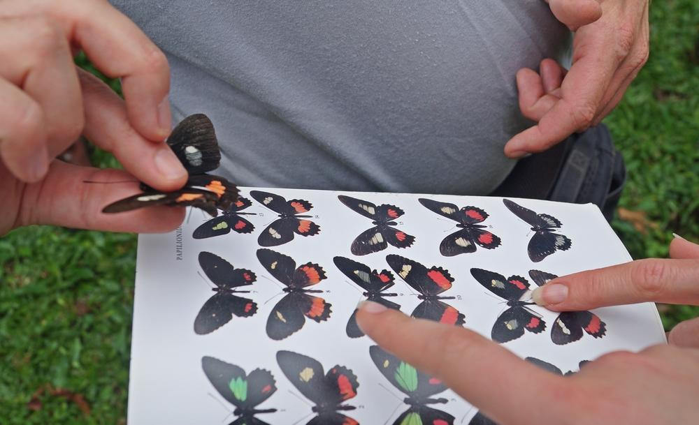 FCER-MISP.Butterfly.Id.Pocosol.jpg