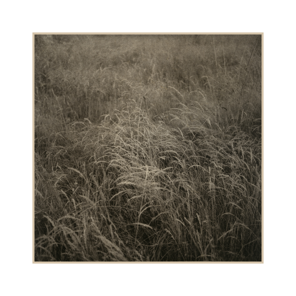 2 Grasses near Lyon.jpg