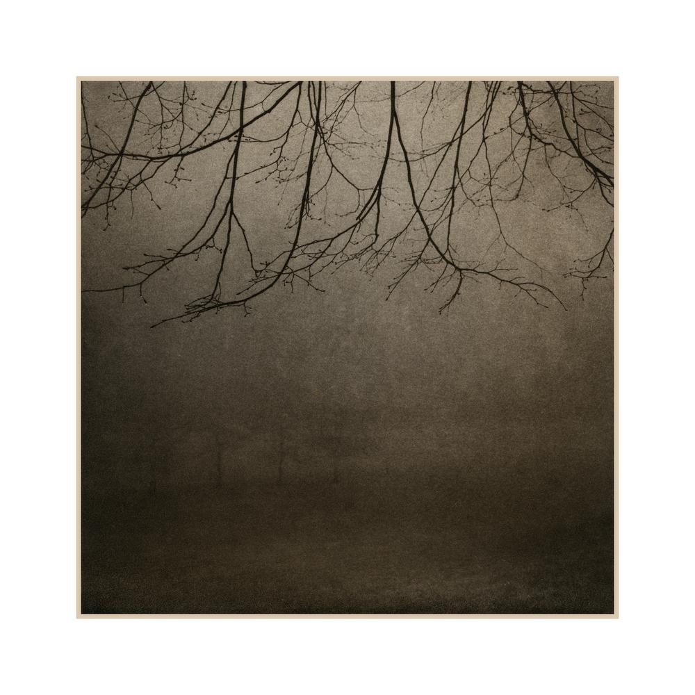 8 Branches.jpg