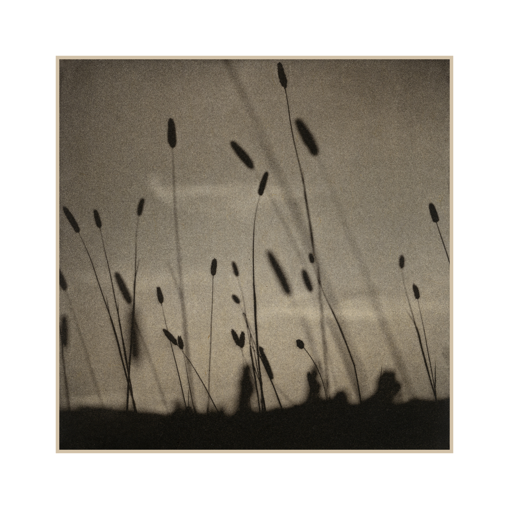 9 Grasses near Sonoma.jpg