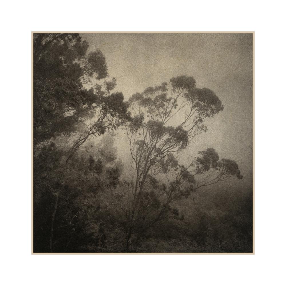 10 Eucalyptus.jpg