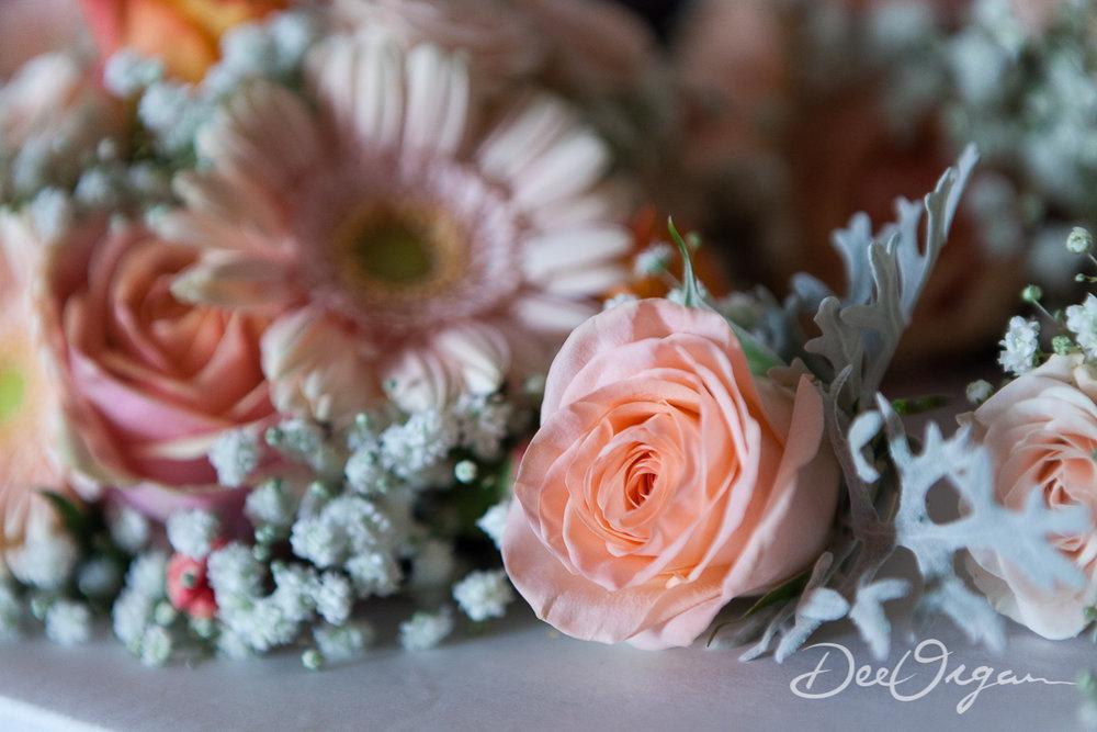 Dee Organ Photography-066-7239.jpg