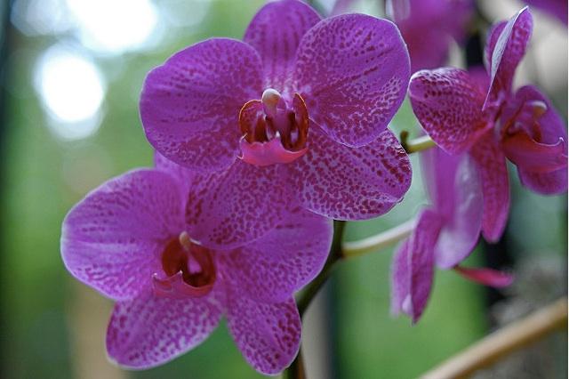 orchids-class.jpg