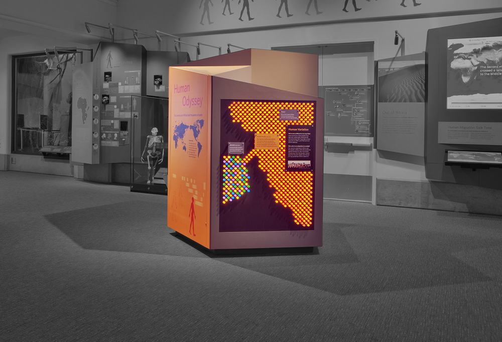 "In our human evolution exhibit, I designed the ""lite brite"" that illustrates how early man's genetic makeup was quite varied until a bottleneck served to almost wipe out the human race during our migration out of Africa."