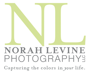 Fine Artist, Pet and Family Photographer, Author, Educator