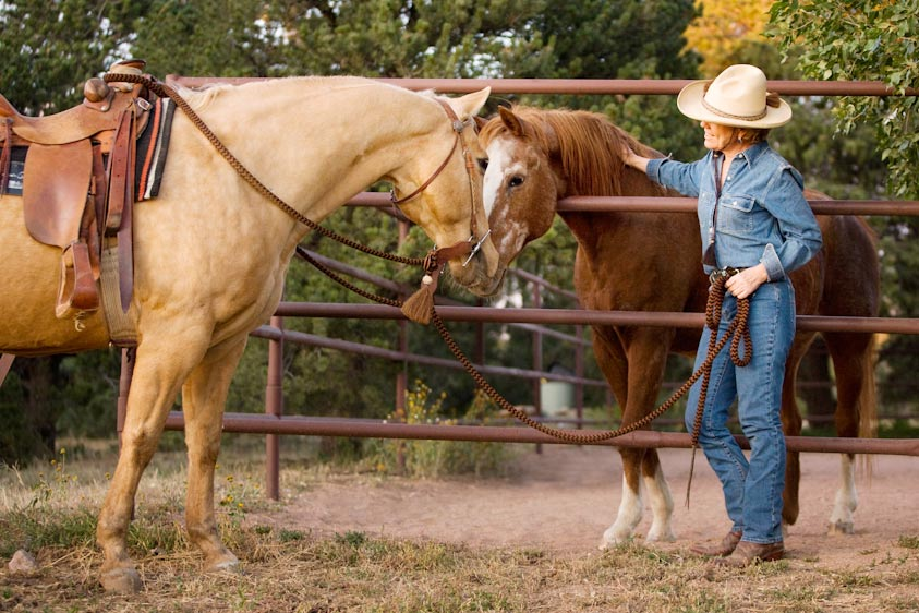 Horse_Photography-3.jpg