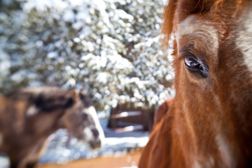 Horse_Photography-11.jpg