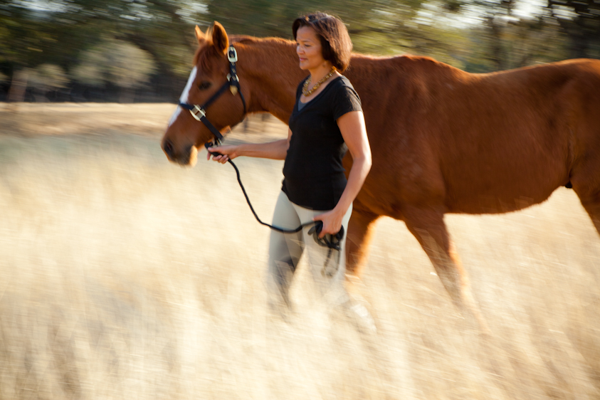 Horse_Photography-18.jpg