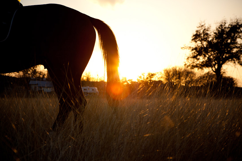 Horse_Photography-21.jpg