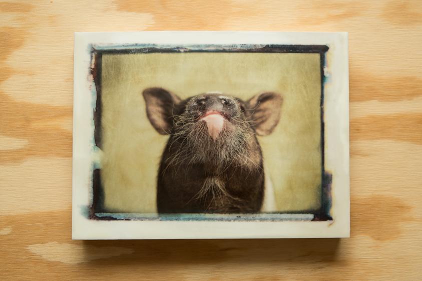Pig#1-002-9x12-1.jpg