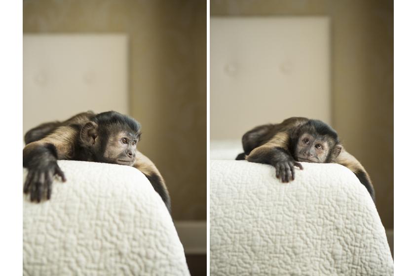 MonkeyDiptych.jpg