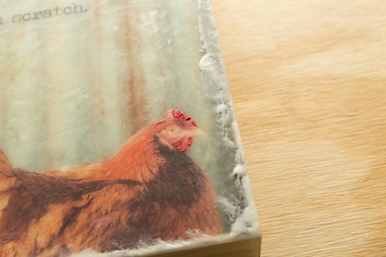 Chicken01.02125.20131115-4.jpg