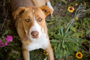 Dog Portrait in Flower garden