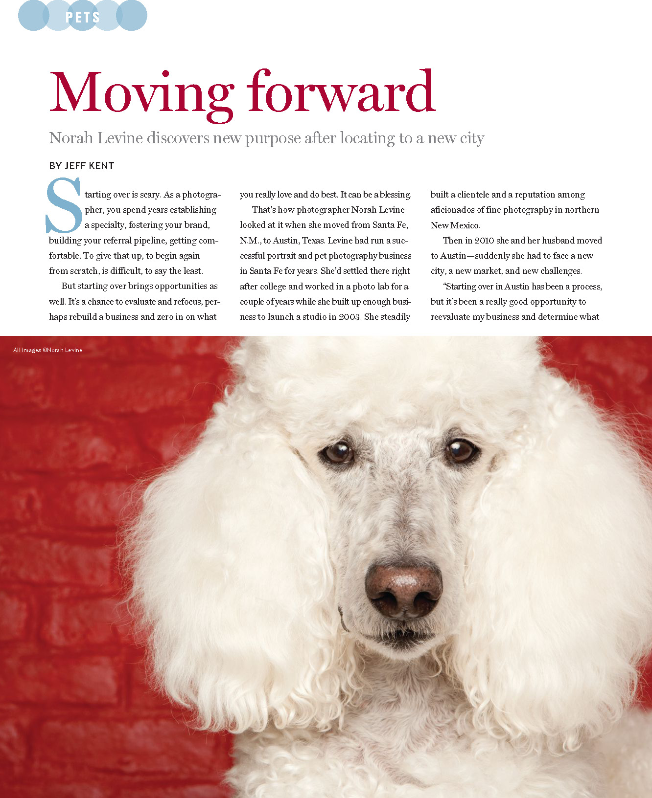 Pet Photography Article