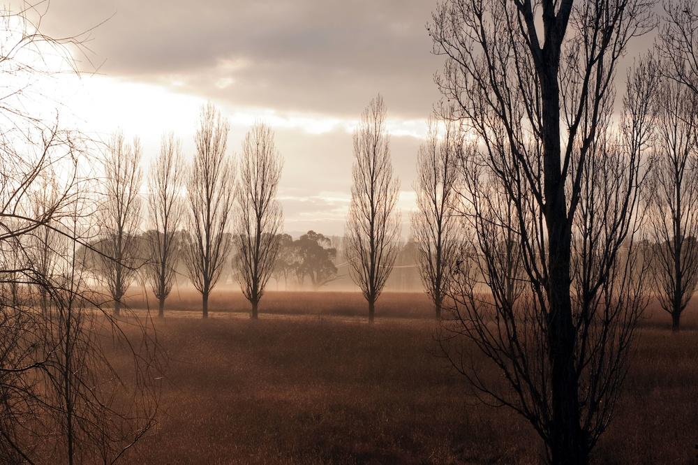 Mayfield Vineyard on a crisp winter's morning.