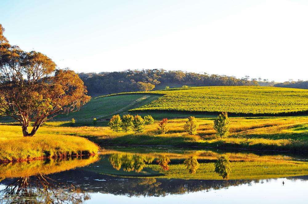 Mayfield Vineyard Views