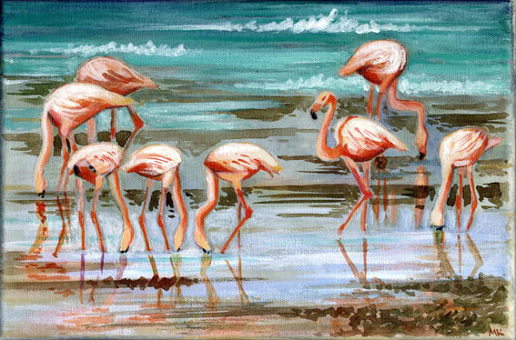 dr janusz  flamingo.JPG