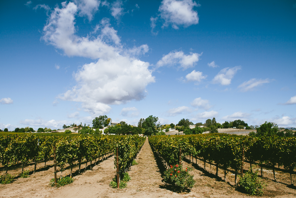 Santa Ynez Wine Tour :: Santa Barbara Wine Tour :: Santa Barbara Transportation :: Rooted Vine Tours :: Santa Barbara, California