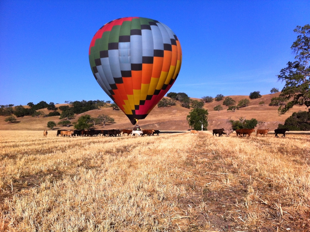 Hot Air Balloon Santa Barbara :: Hot Air Balloon Santa Ynez :: Wine Tours Santa Barbara :: Rooted Vine Tours :: Santa Barbara, California