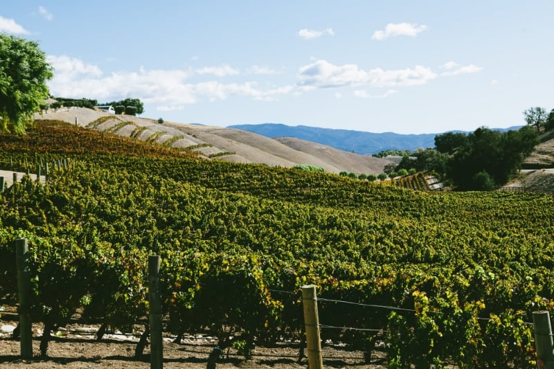 Santa Barbara Boutique Winery :: Rooted Vine Tours