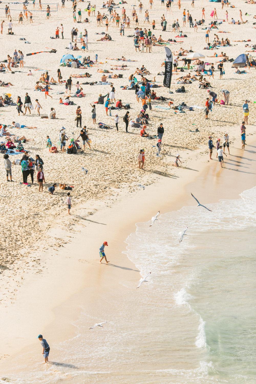 festival-of-the-winds-bondi-beach-sydney-34.jpg