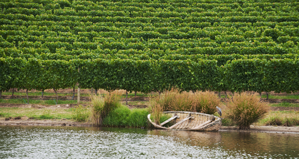 Click through to Winery Photography Gallery...