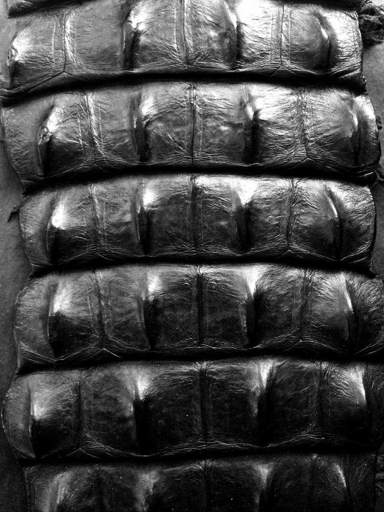 To See Where This Piece Of Crocodile Leather Were Located On Our Mood Board Go