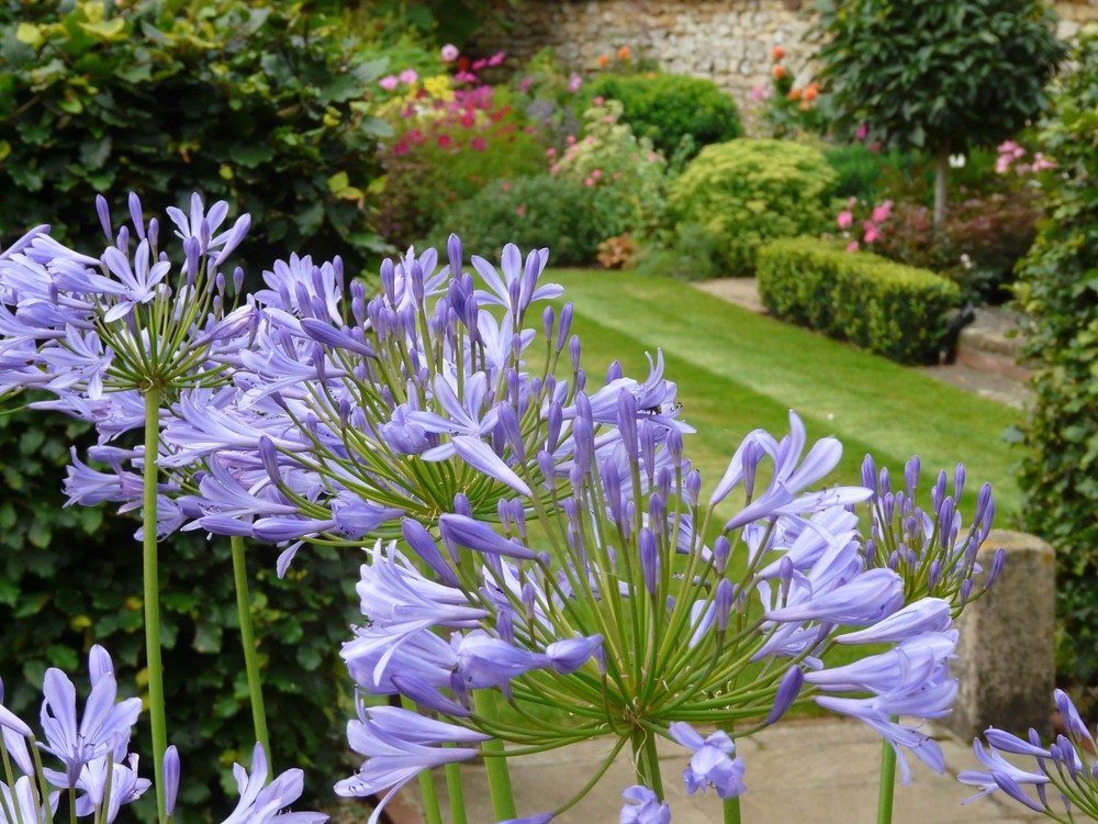 Country garden in Welbourn, Lincolnshire