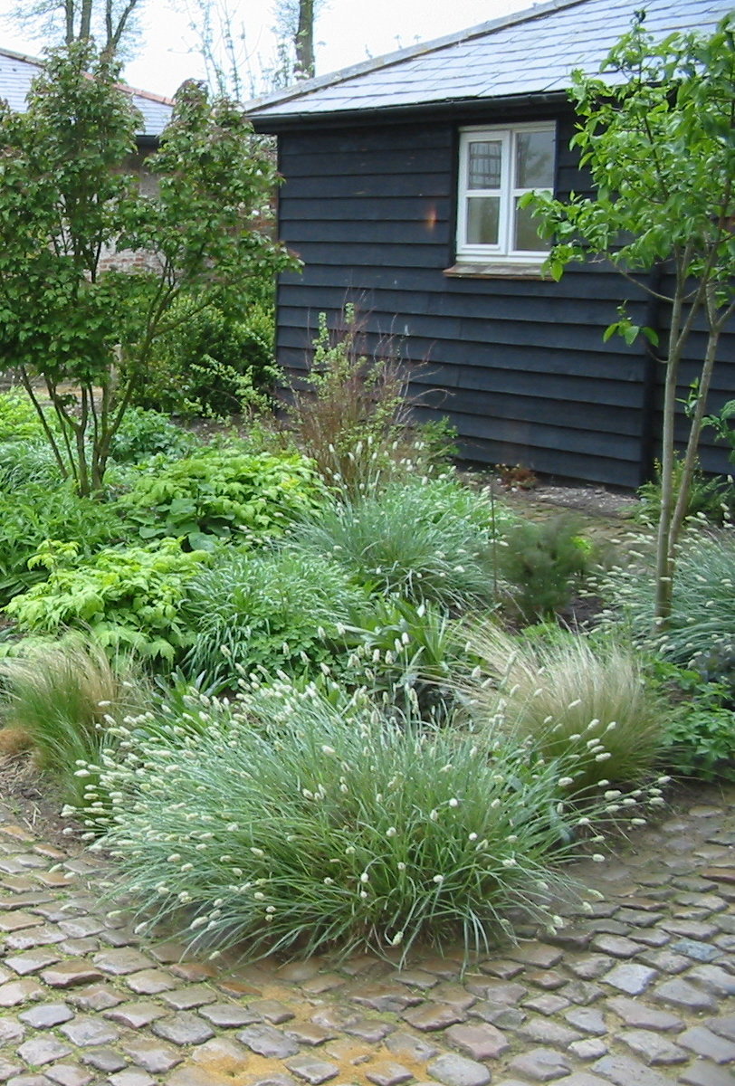 Indian summer grasses guy petheram garden design for Indian garden design