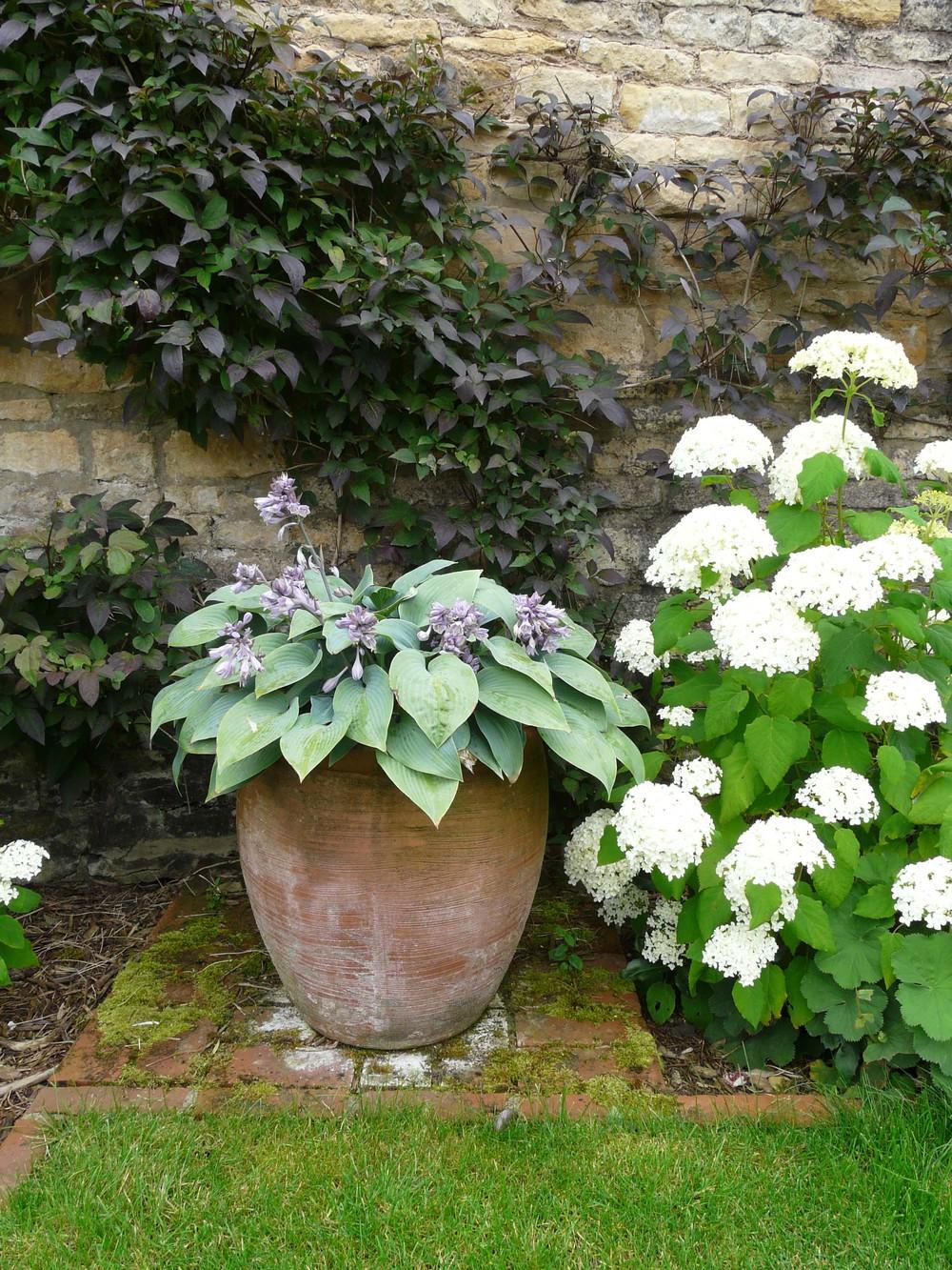 Terracotta pot in Fulbeck garden.jpg