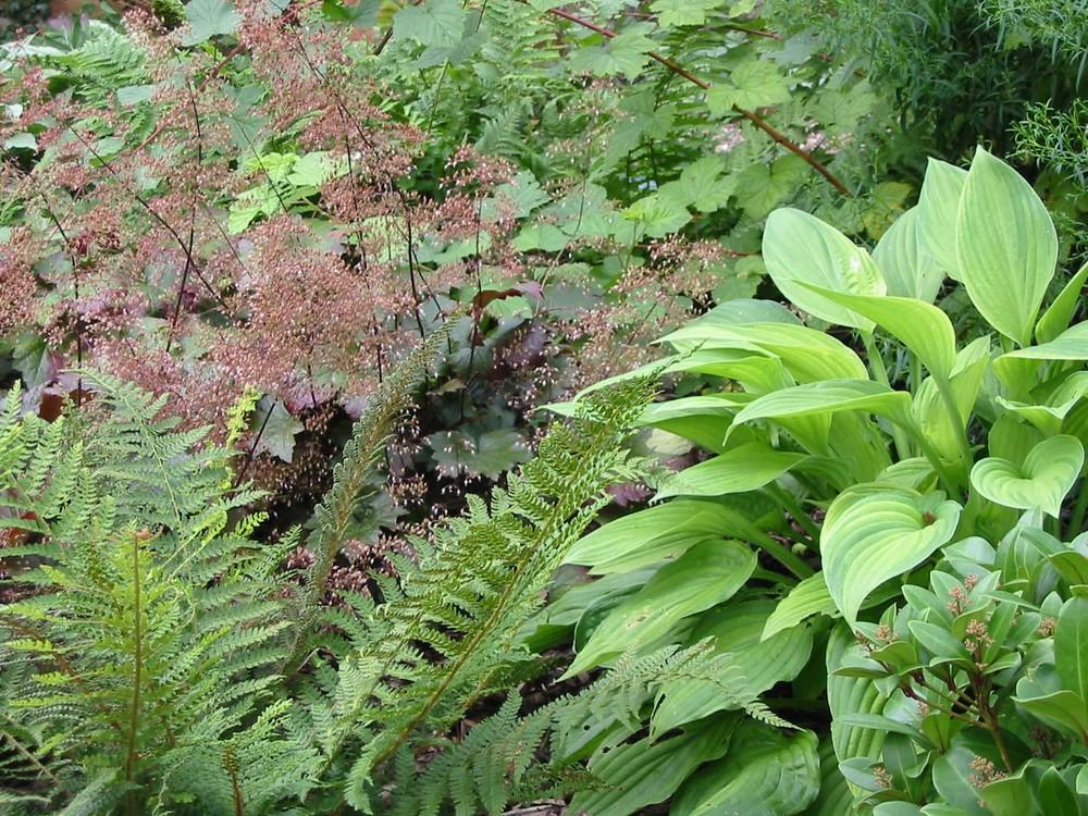 Shade planting in Lincoln garden.jpg
