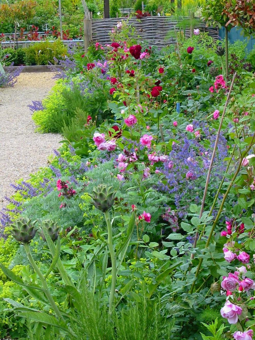 Cottage garden planting in Grantham.jpg