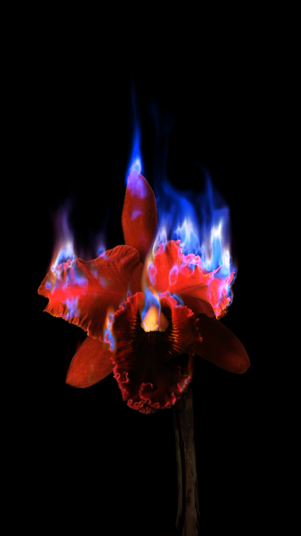 Mat Collishaw, Burning Flower