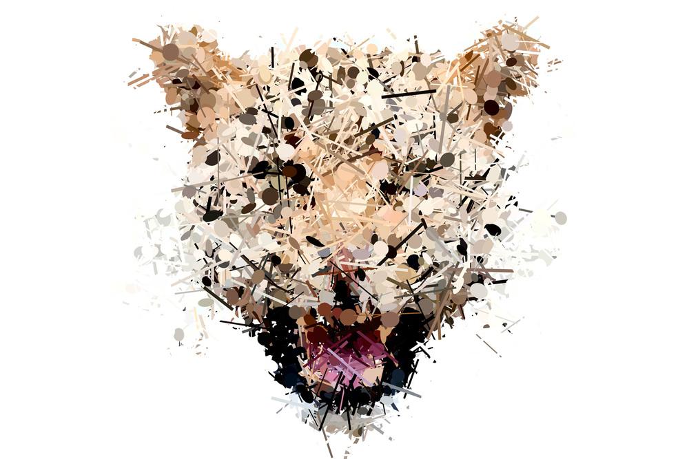 leopard-detail.jpg