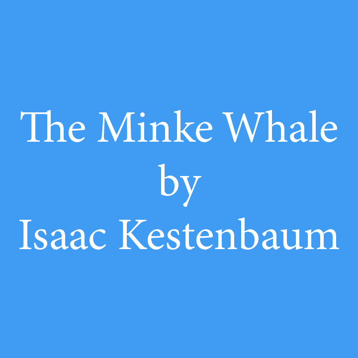 The Minke Whale by Isaac Kestenbaum.jpg