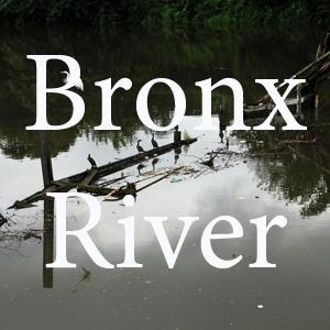 Bronx River pc Nate Dorr.jpg