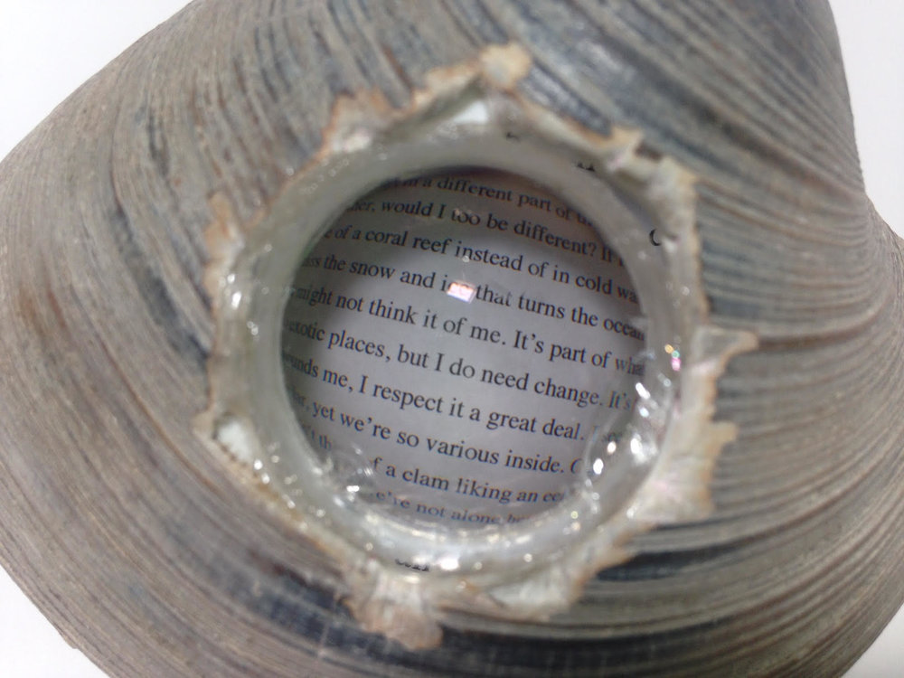 clam lens 2.jpg