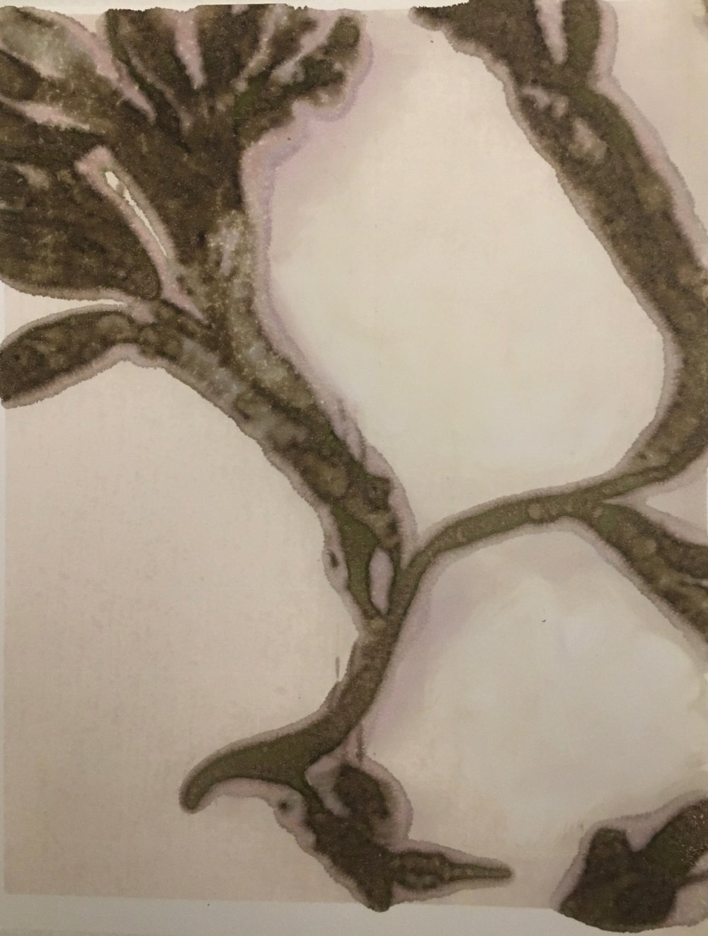 Photographic Monoprint. Fucus vesiculosus.