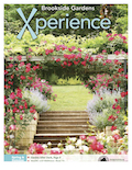 Xperience_cover.png